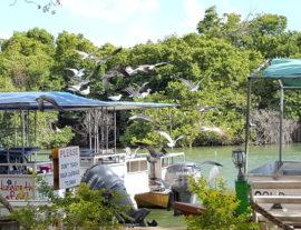 Saint Elizabeth Safari Boats